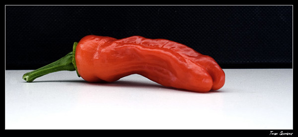 Peter penis pepper LED grown