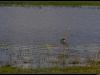 20121231-125910-t-IMG_2023-Border