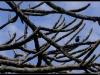 20130113-110504-t-IMG_2605-Border